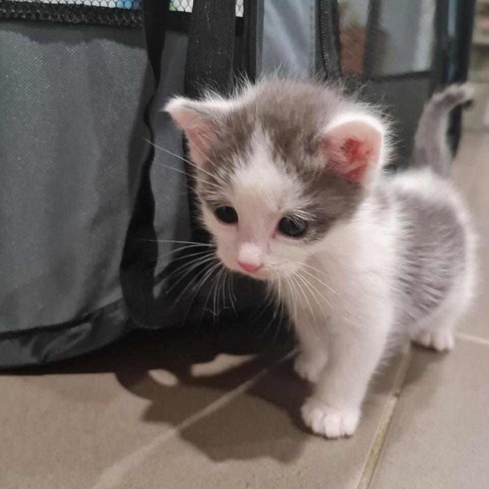 Gatito estaba solo