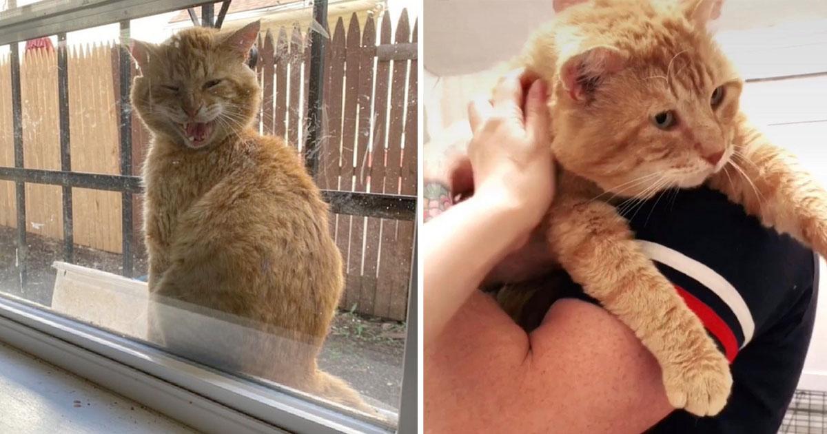 Gato aparece ventana pidiendo dejen entrar