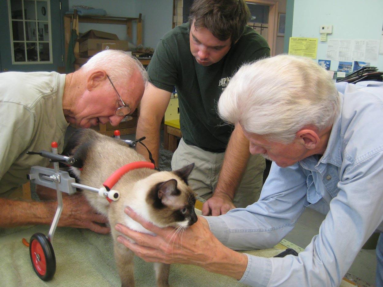 Gentil veterinario jubilado
