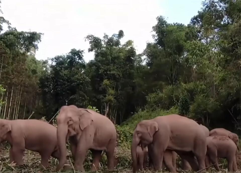 Grupo de animales campo