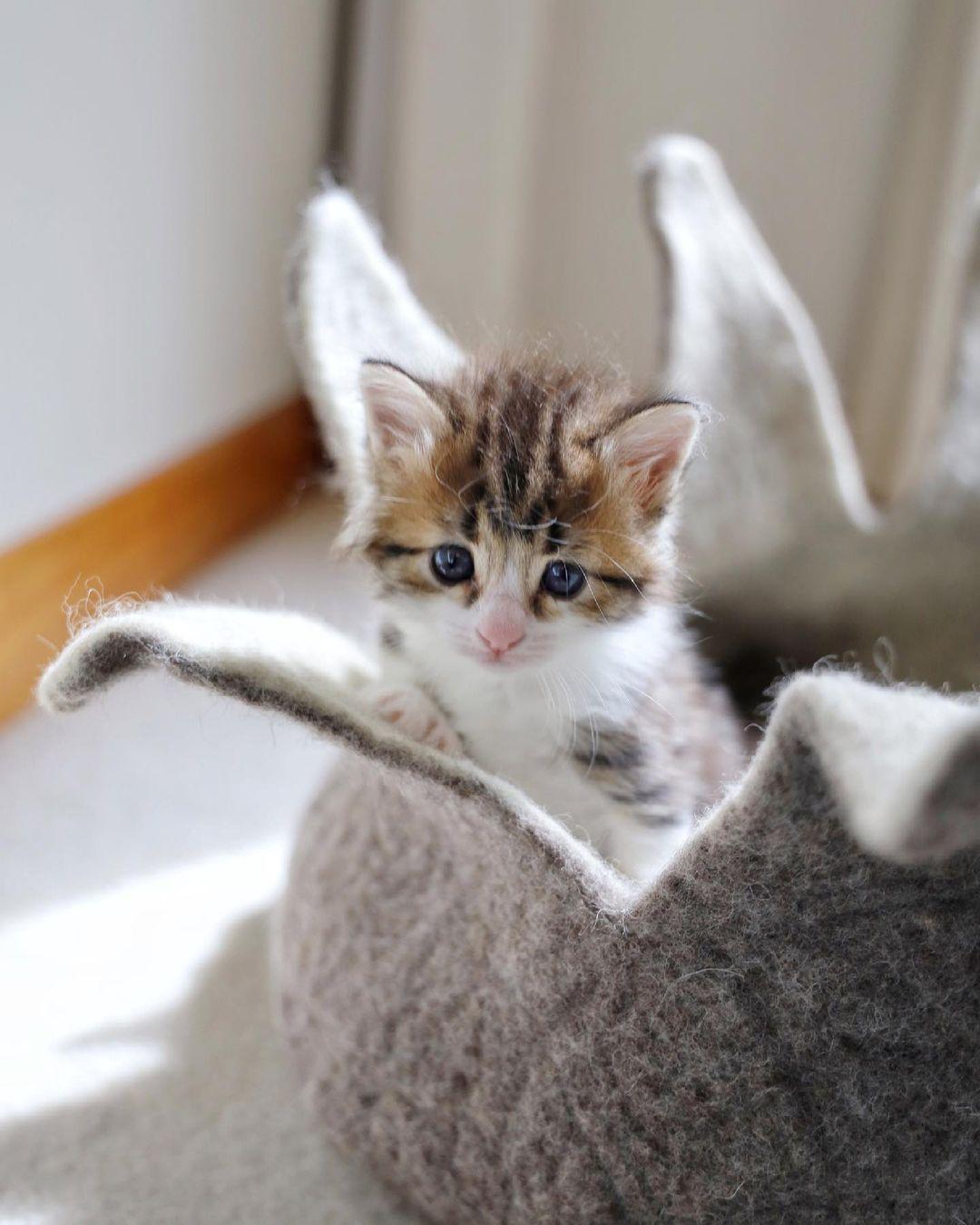 Hermosa felina rescatada