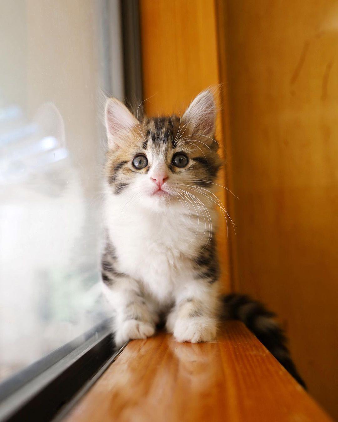 Hermoso gatito esponjoso