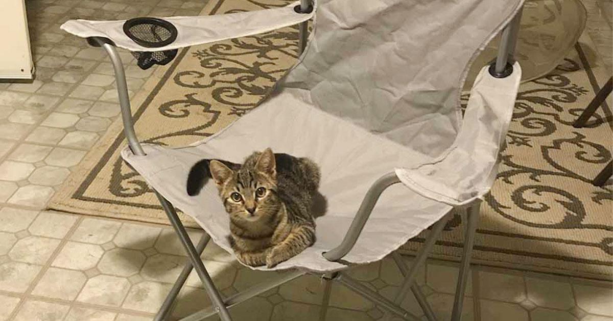 Hombre llega a casa y encuentra un gato esperando en su silla