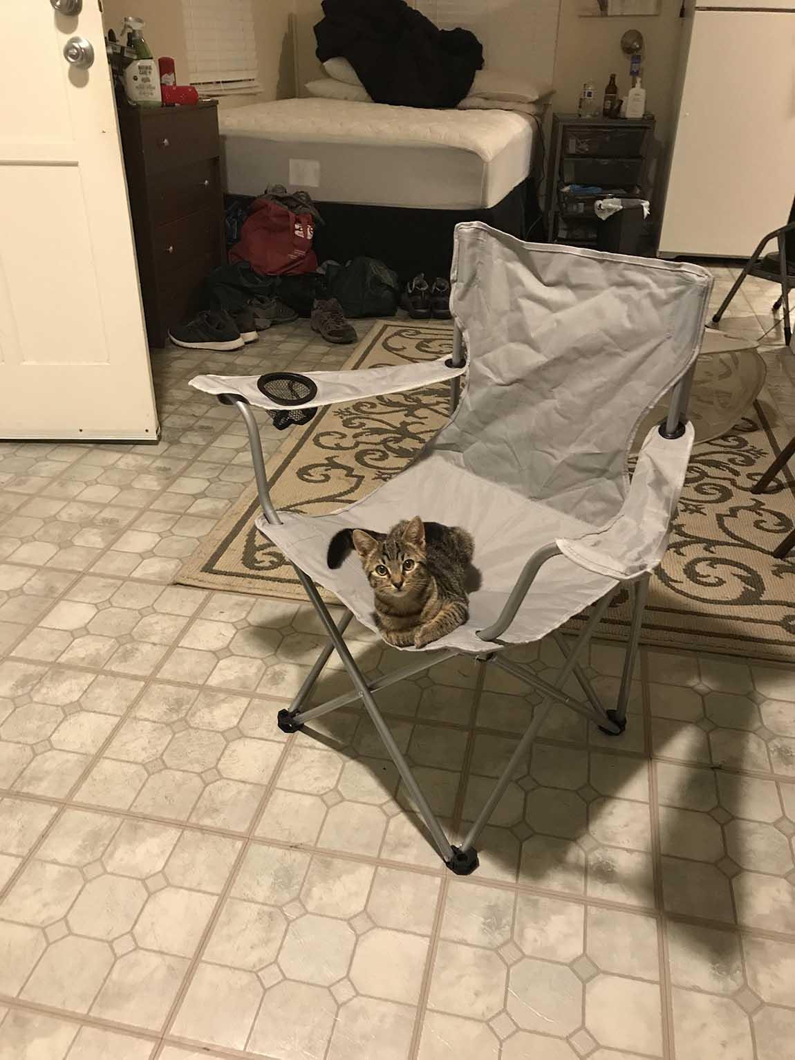 Hombre llega a casa y encuentra un gato, pero no tiene un gato