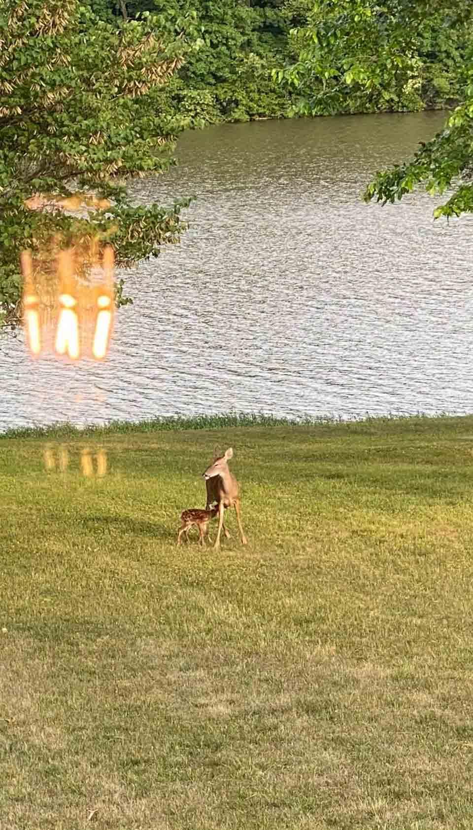 Mamá ciervo y su cría