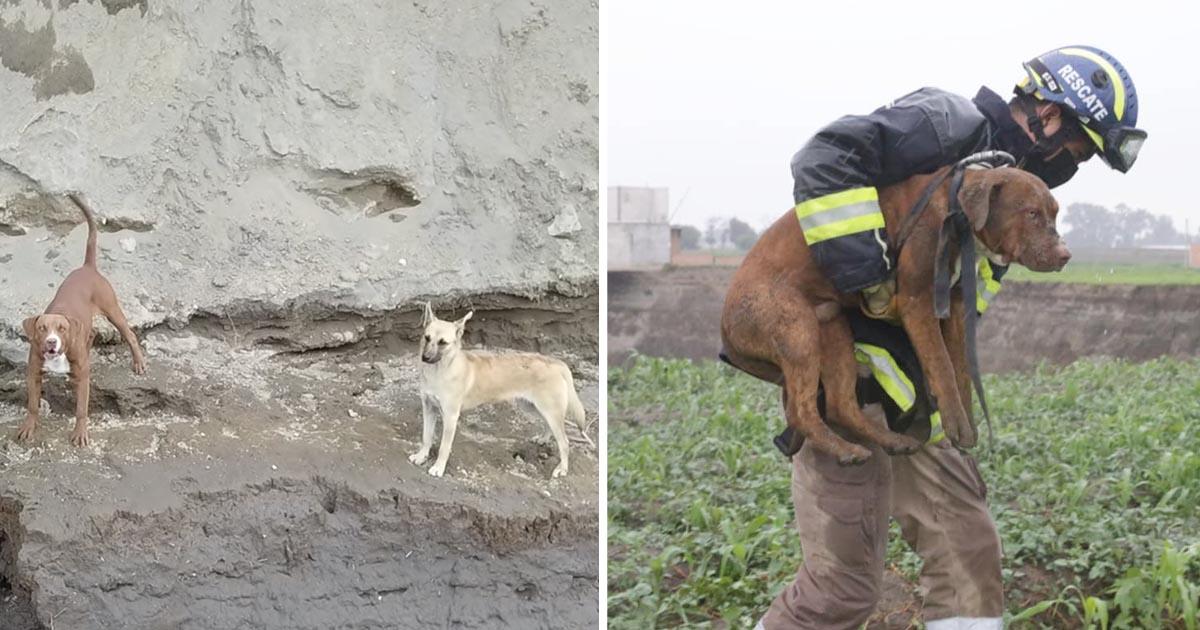 Rescatan perritos cayeron socavón gigante méxico