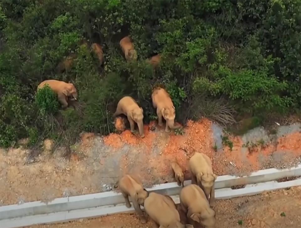 Una Manada de elefantes