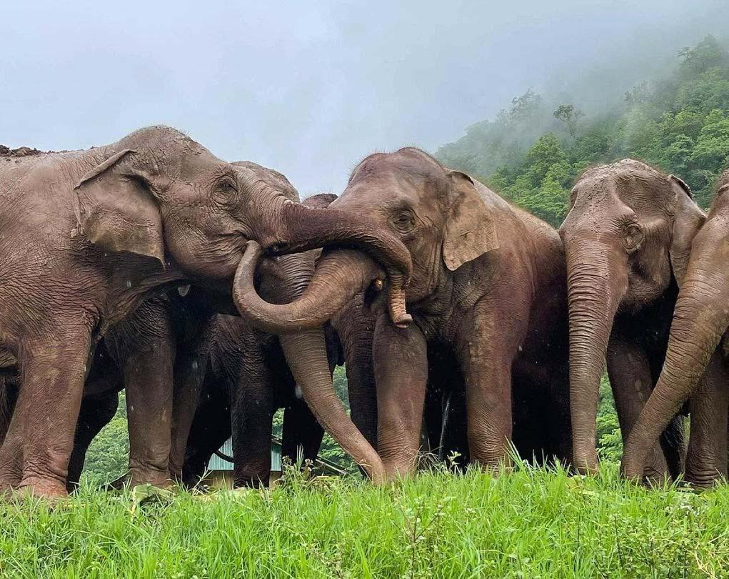 Amigos elefantes