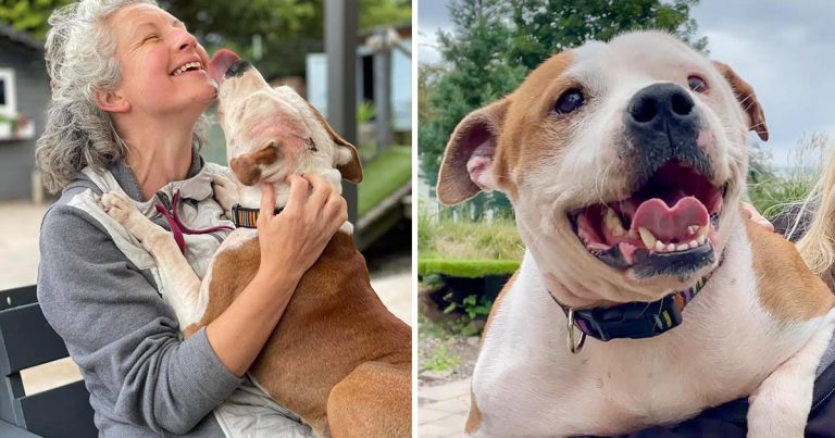Este centro de rescate está buscando voluntarios para abrazar perros