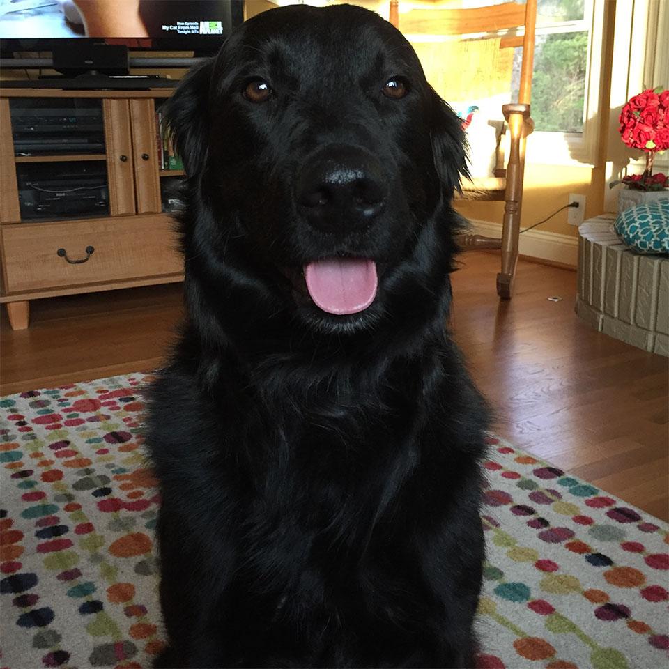 Edgar perro perdido
