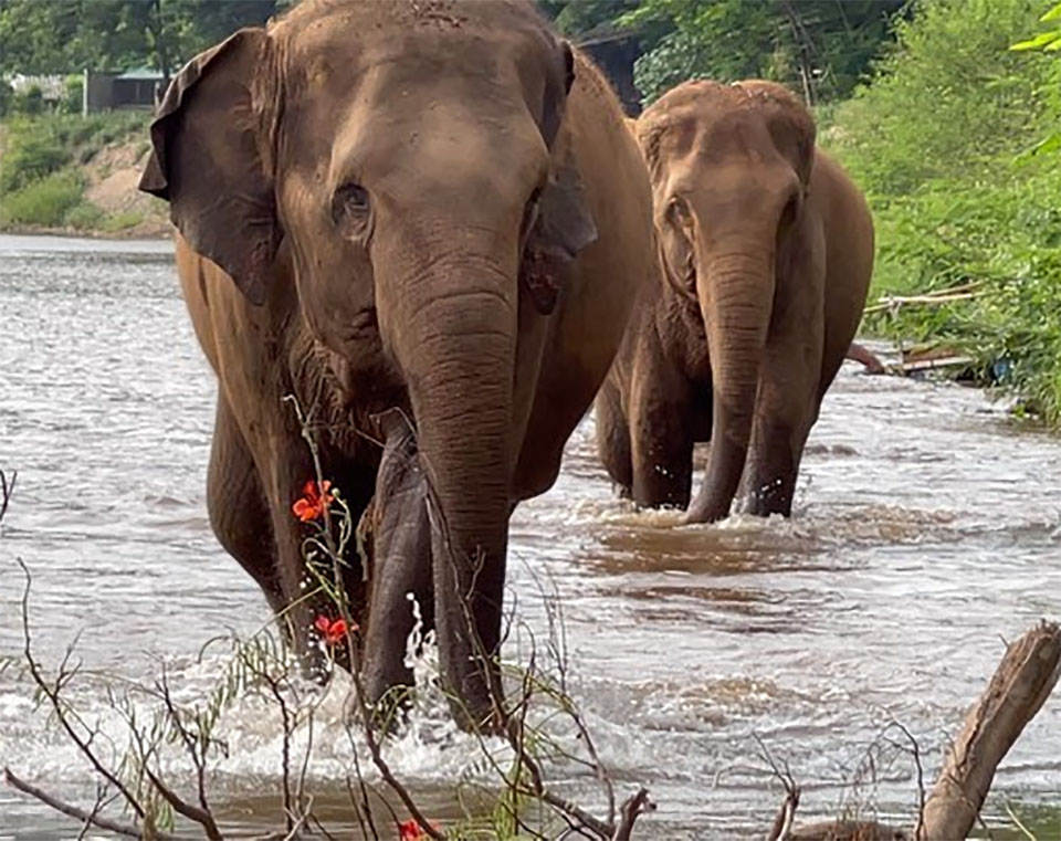 Elefante ciego recibe ayuda