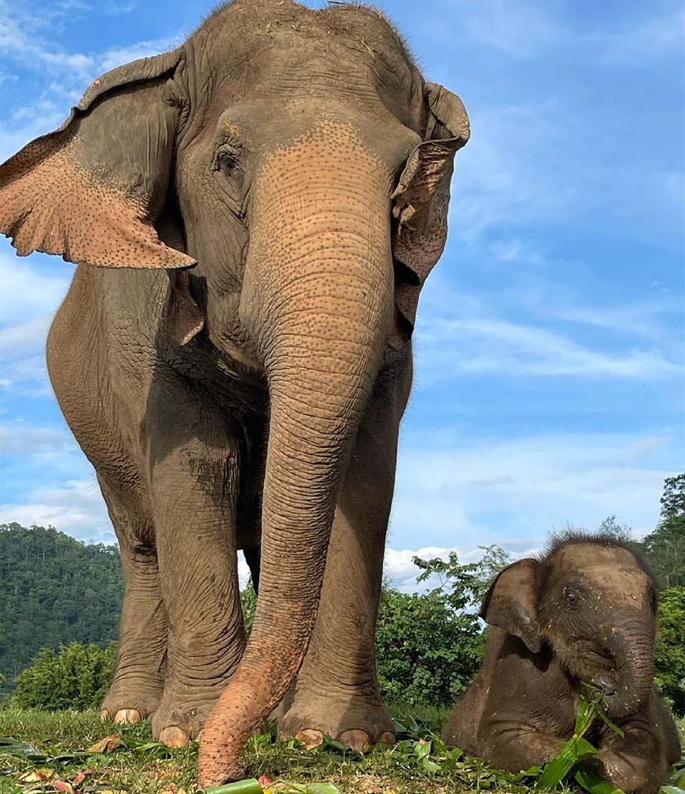 Elefante recibe ayuda