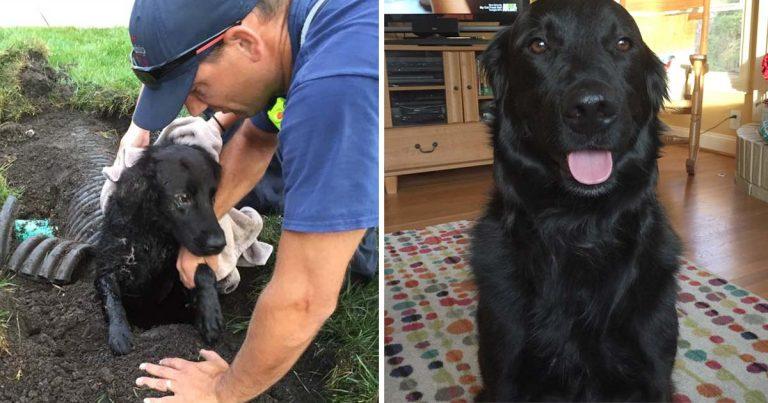 Familia encuentra a su perro perdido atrapado en un desagüe una semana después