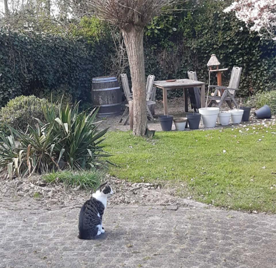 Gatito en el jardín