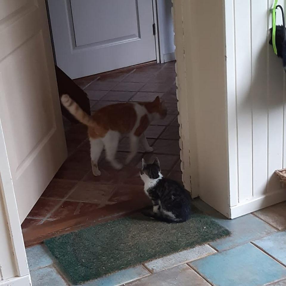 Gatito entra a casa
