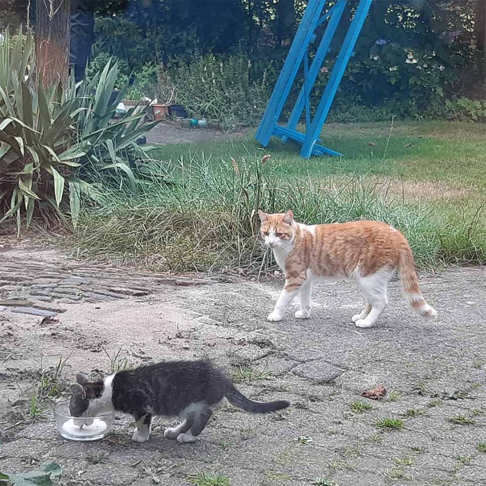Gato hace amigo
