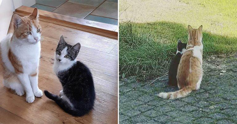 Gato se hace amigo de un gatito que encontró en el jardín y decide llevarlo a casa
