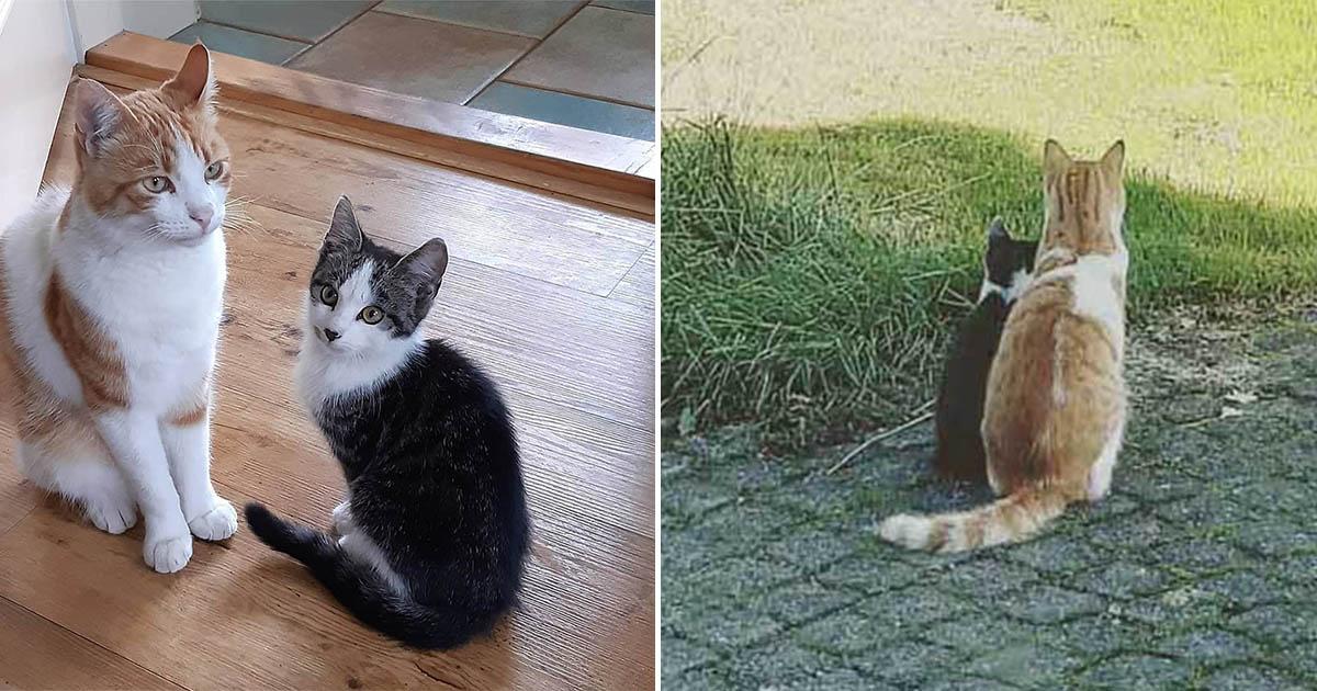 Gato se hace amigo de un gatito