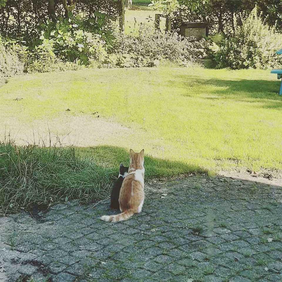 Gato se hace amigo gatito