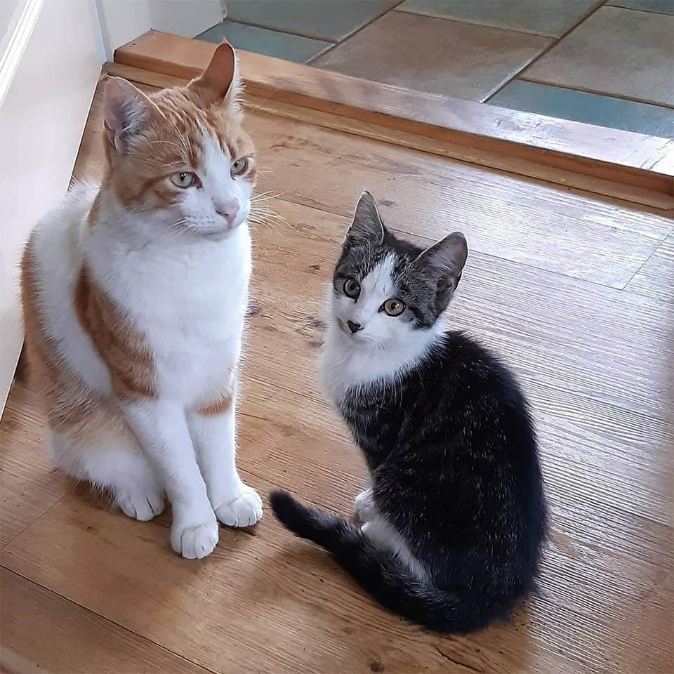 Gato se hace amigo