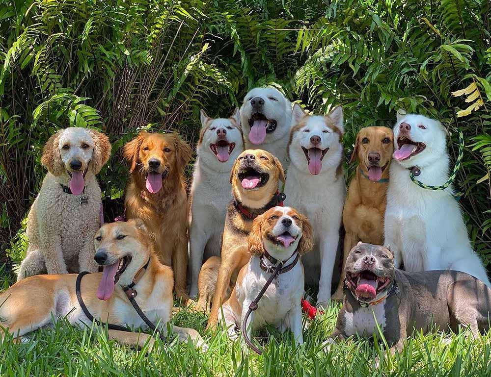 Grupo de perritos posando
