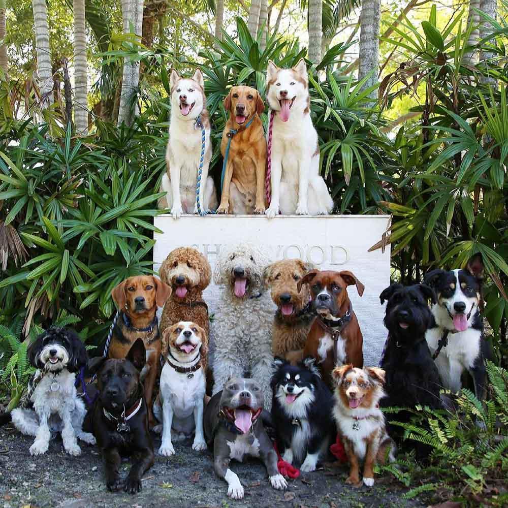 Guardería para perros toma las fotos más perfectas de perros