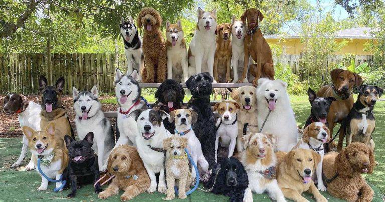 Guardería canina logra lo imposible al tomar las fotos más perfectas de perros en grupo