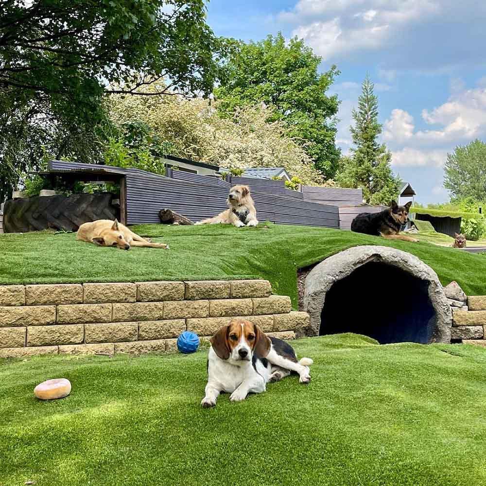 Hermoso centro de rescate para perros