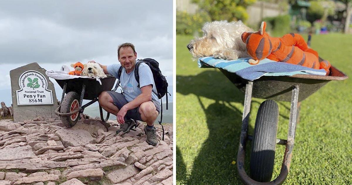 Hombre lleva a su perro con cáncer a la montaña para una 'última aventura' en carretilla