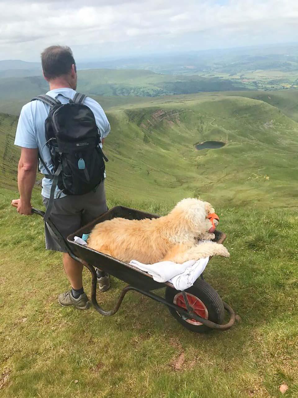 Hombre lleva a su perro con cáncer a última aventura en carretilla