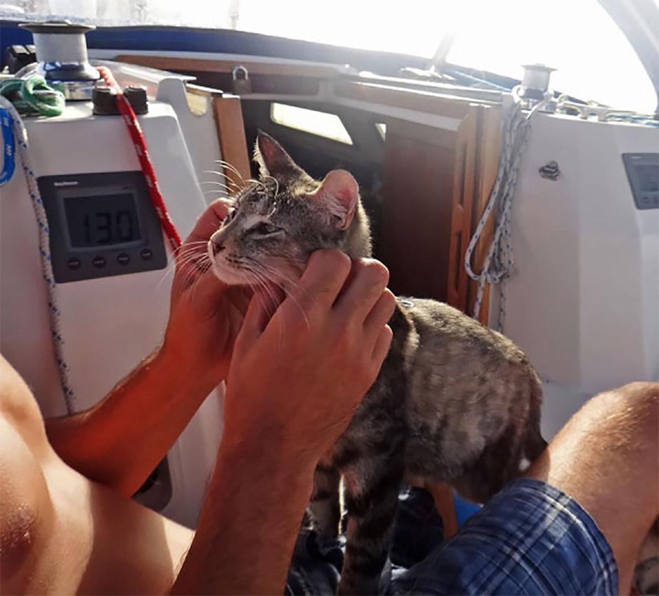 Navegante felino