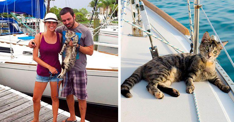 Pareja renuncia a sus trabajos y vende todo para viajar por el mundo junto a su gato