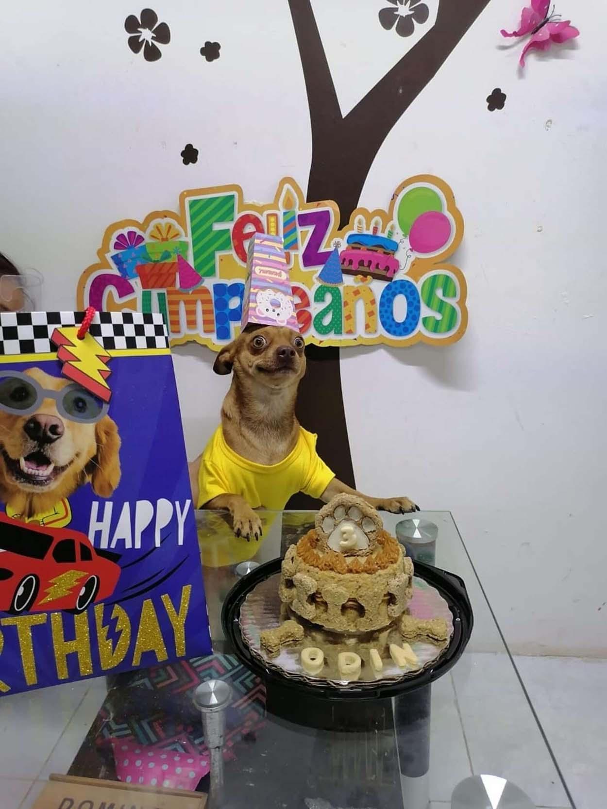 Perrito celebra su cumpleaños