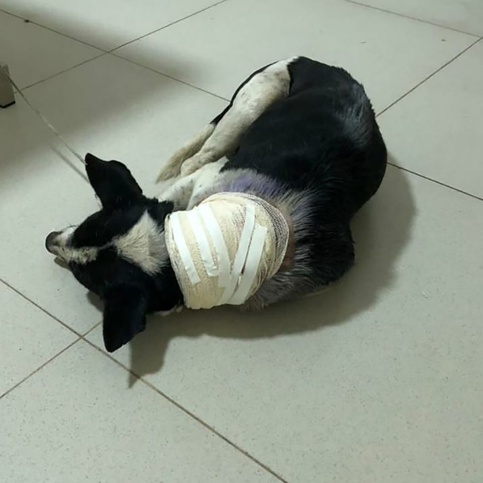 Perrito herido