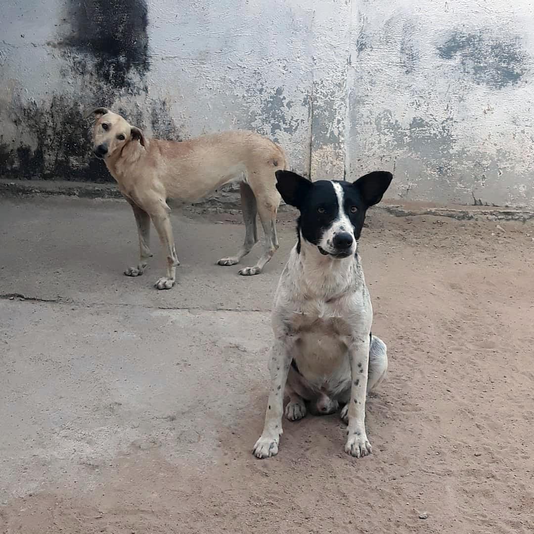 Perro espera hogar