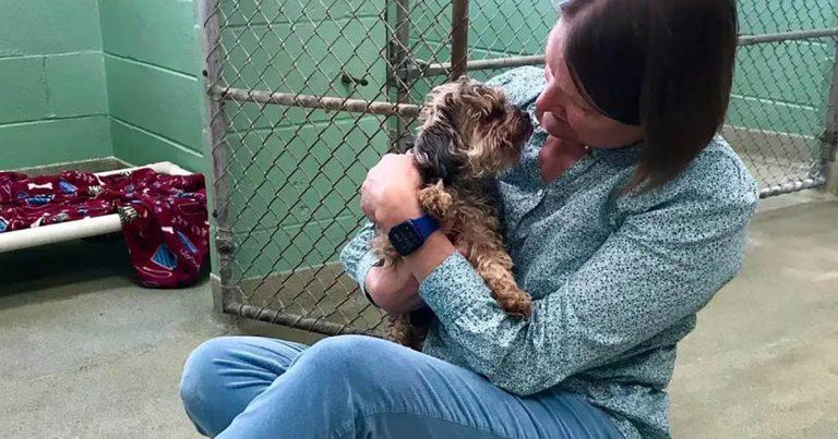 Perro fue encontrado a más de 1,000 millas de distancia 7 años después de su desaparición