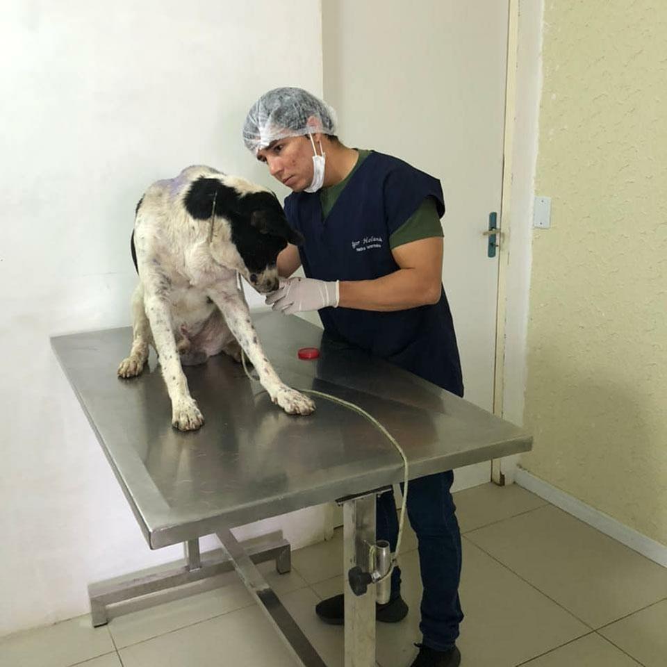 Perro ingresa solo a la clínica veterinaria para pedir ayuda