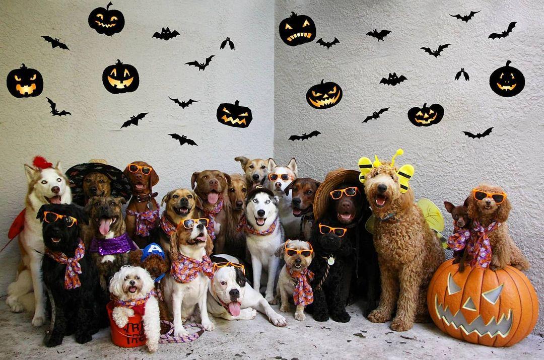 Perros en halloween