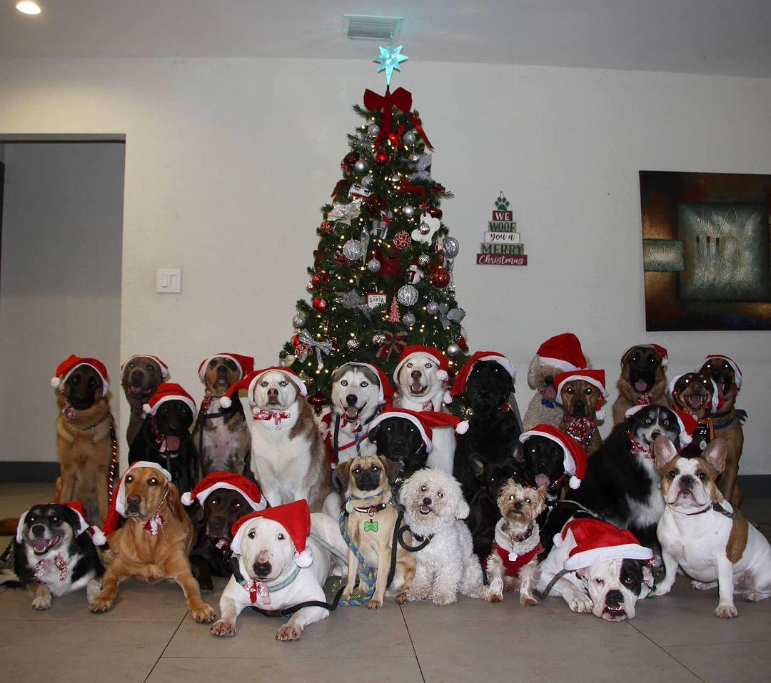 Perros posan para foto