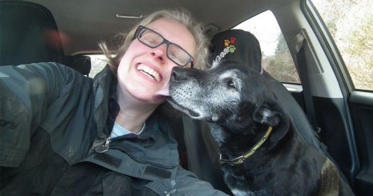 Mujer crea el primer hospicio para animales donde los perros mayores pasan sus últimos días