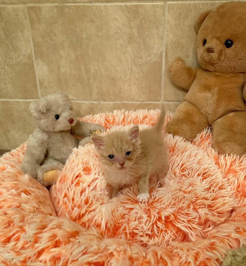 Adorable gatito hace amigo en el refugio