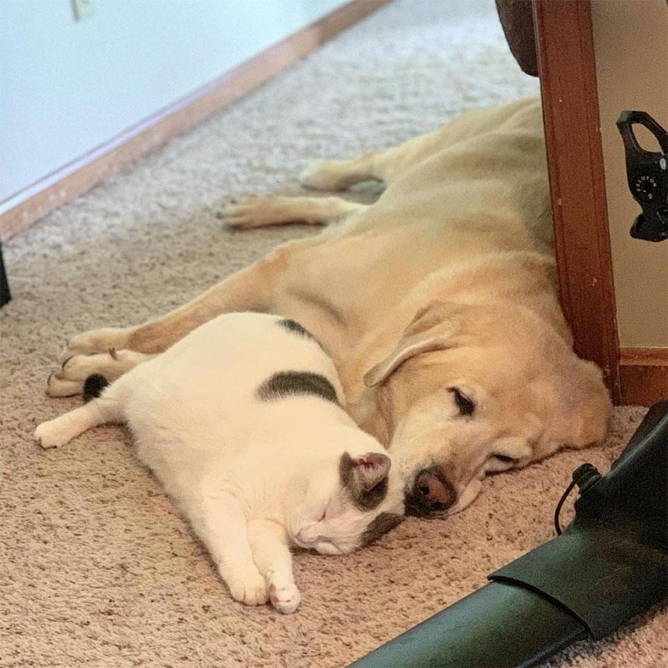 Amigos descansando