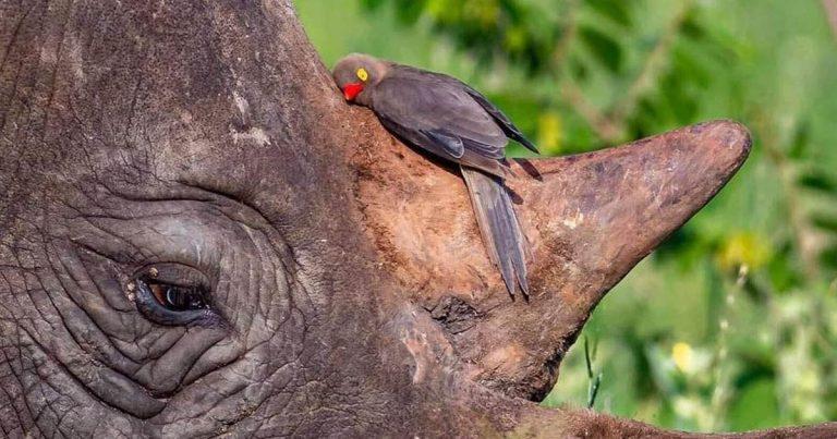 Dos amigos improbables atrapados en el abrazo más dulce de la naturaleza