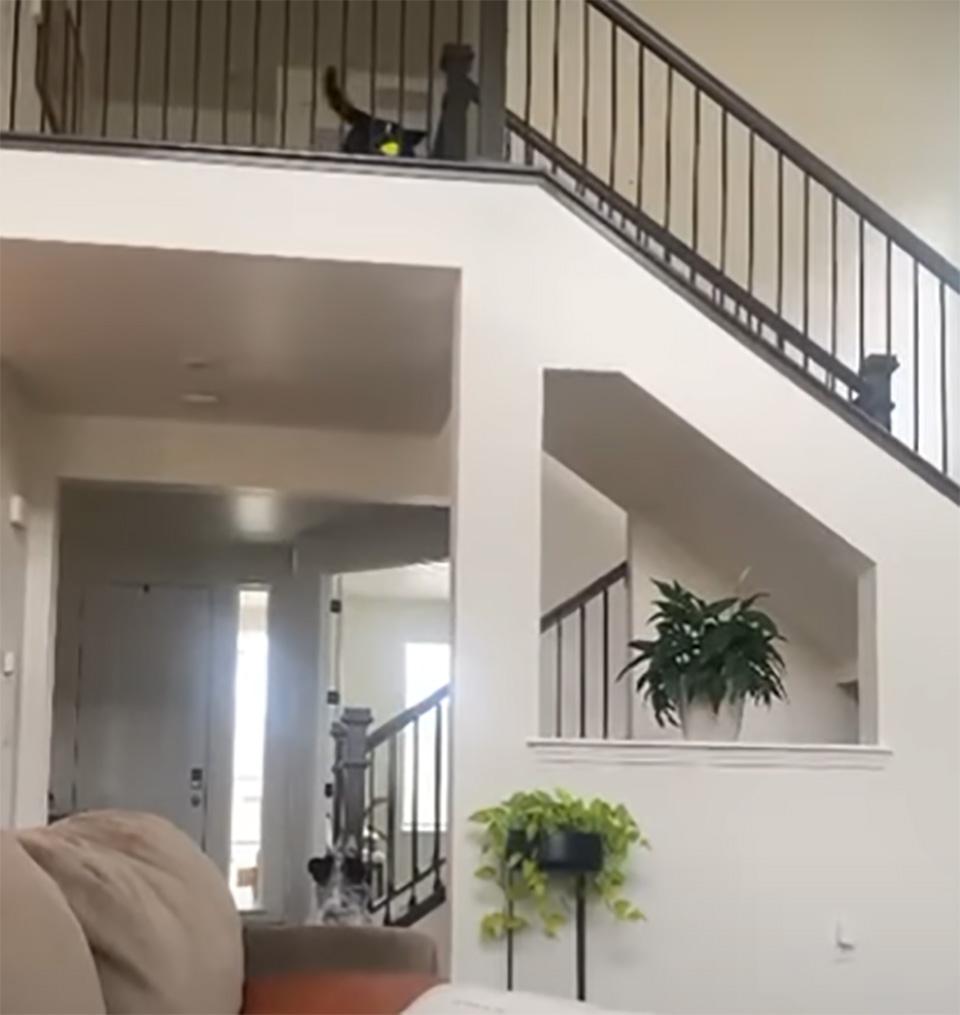 Dos perros inteligentes jugando