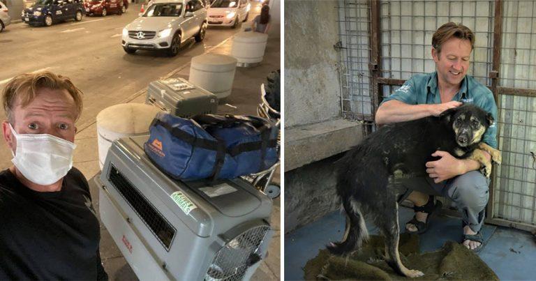 Exmarine británico no se rinde hasta poder rescatar a casi 200 perros y gatos de Kabul