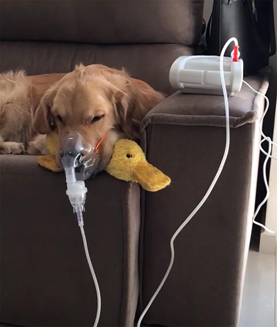 Fred recibiendo tratamiento