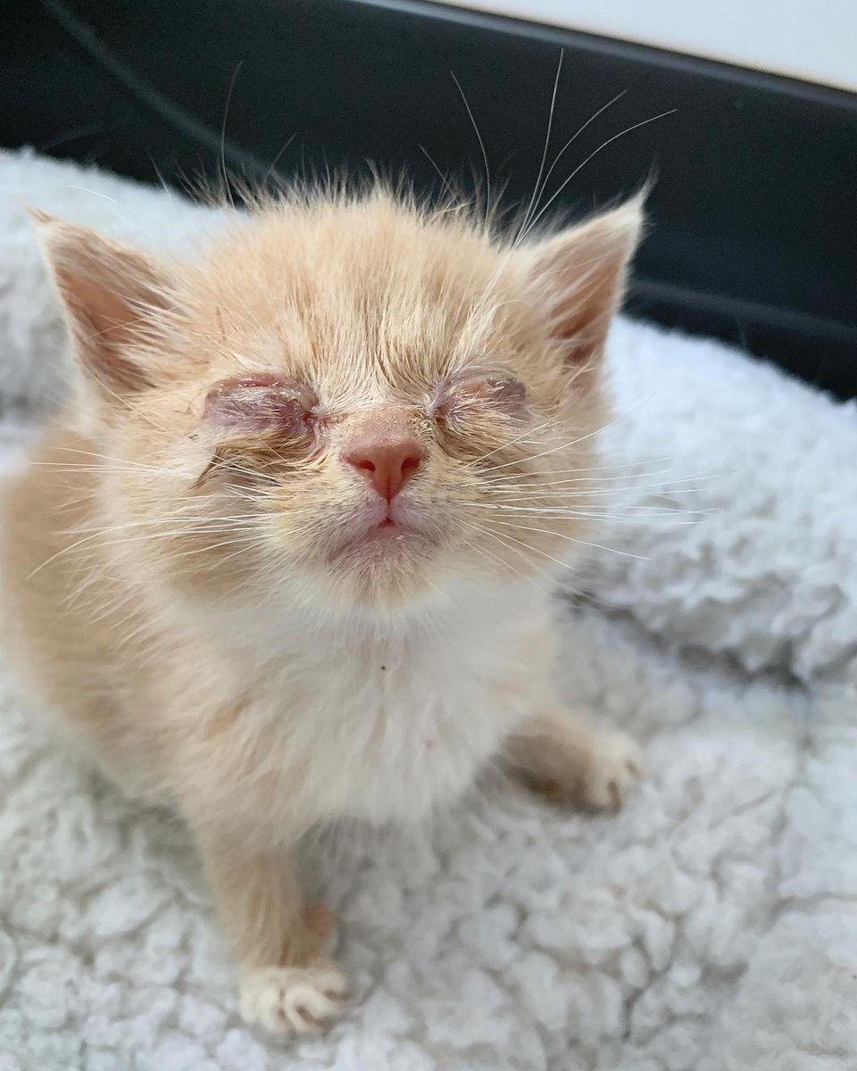 Gatito hace amigo en el refugio