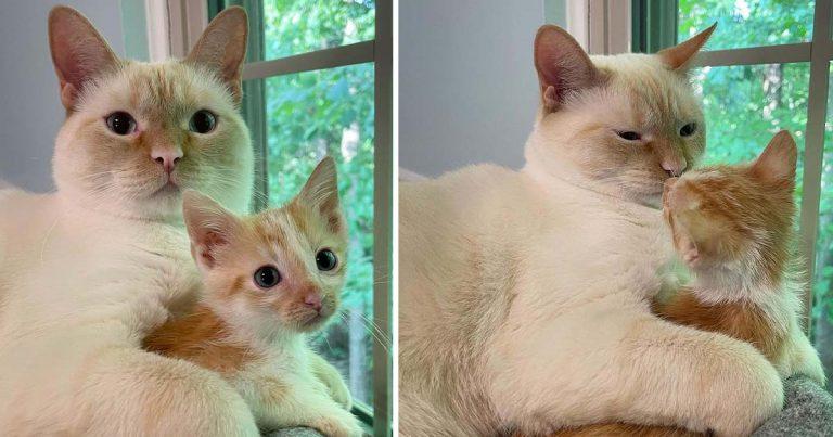 Gatito rescatado se hace amigo del gato de la familia y le exige abrazos constantes
