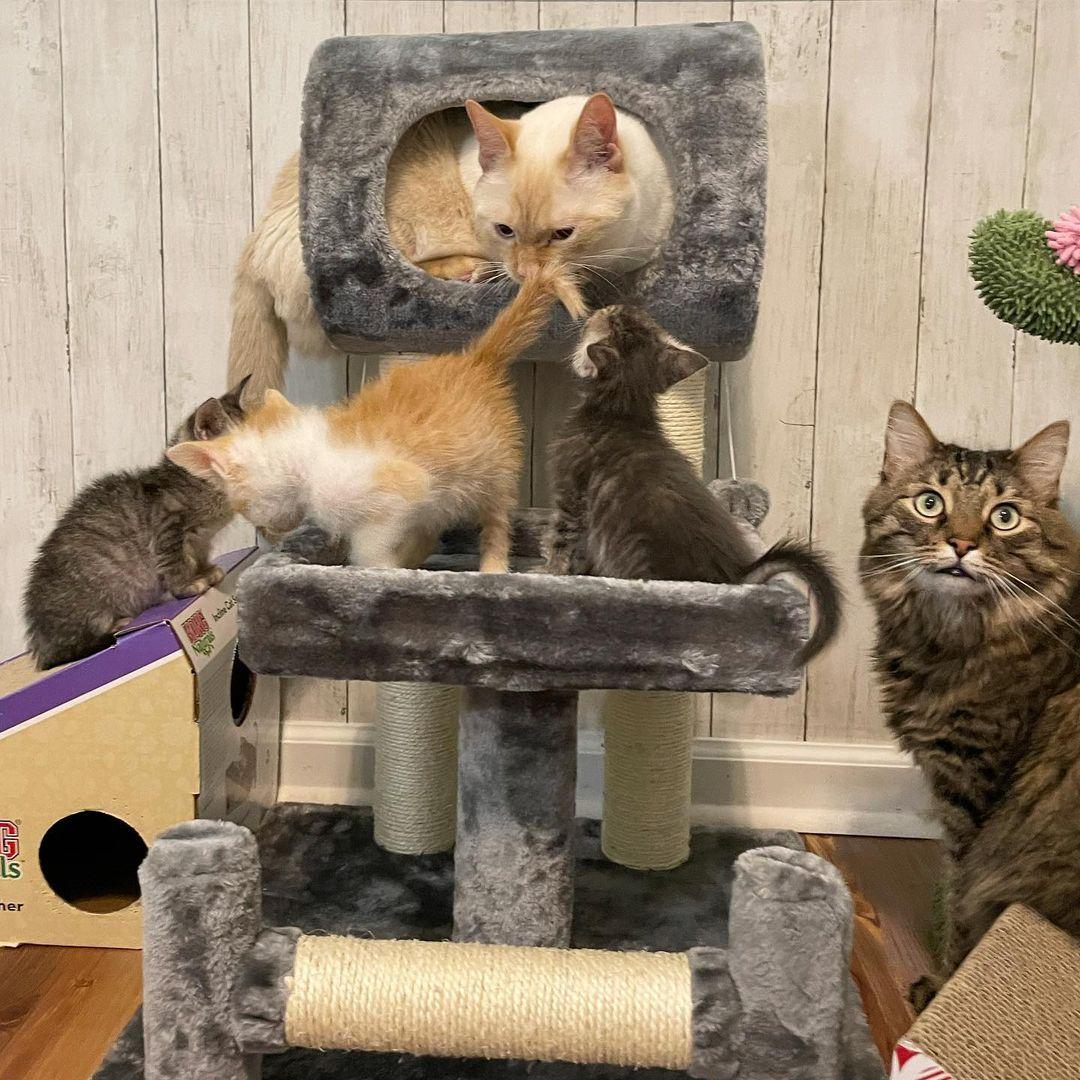 Gatito rescatado se hace amigo del gato de la familia