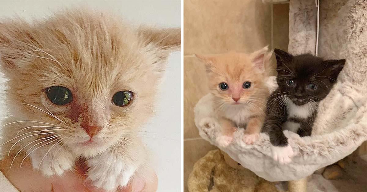 Gatito se hace amigo de otro gato cuando más se necesitaban